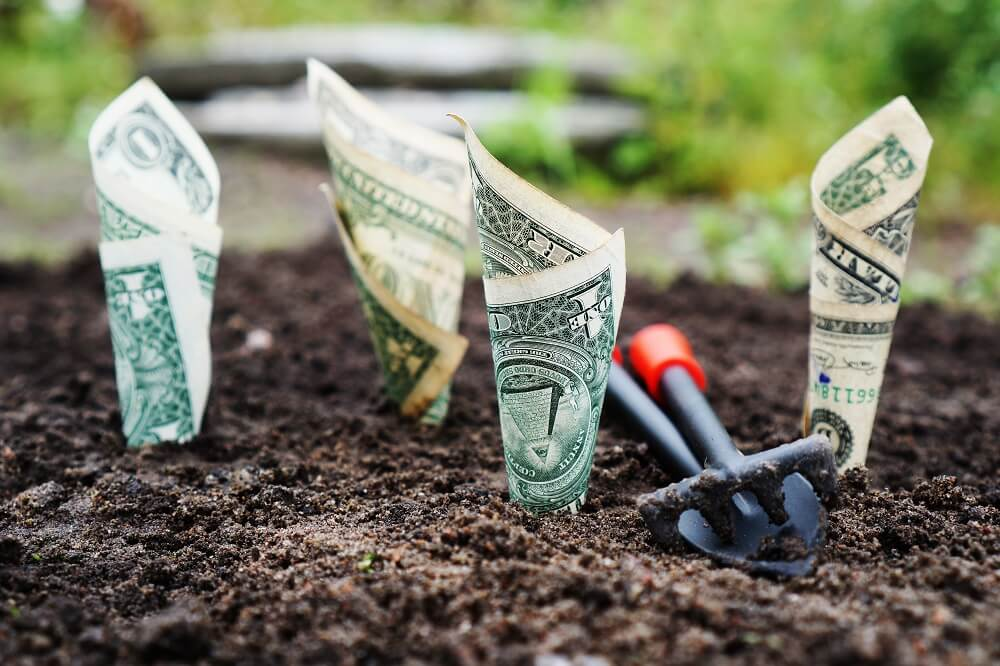 dollar bills growing out of soil