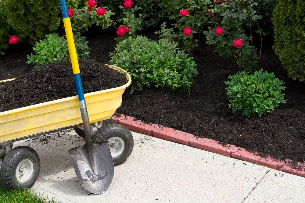 bushes and garden equipment